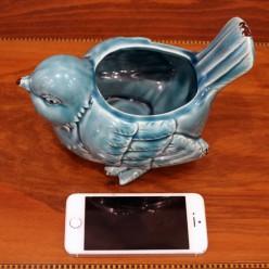 Kaşpo mavi quş